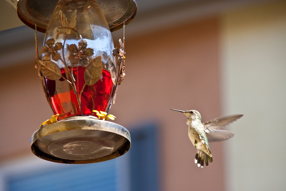 hummingbird-feeding-742919_960_720.jpg