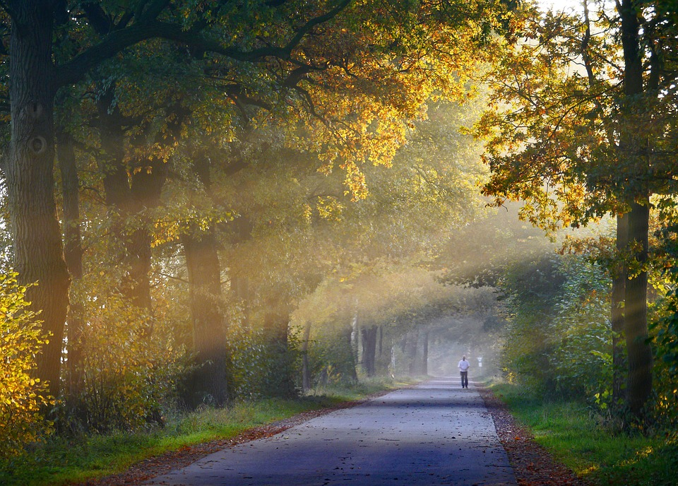 autumn-1751764_960_720.jpg