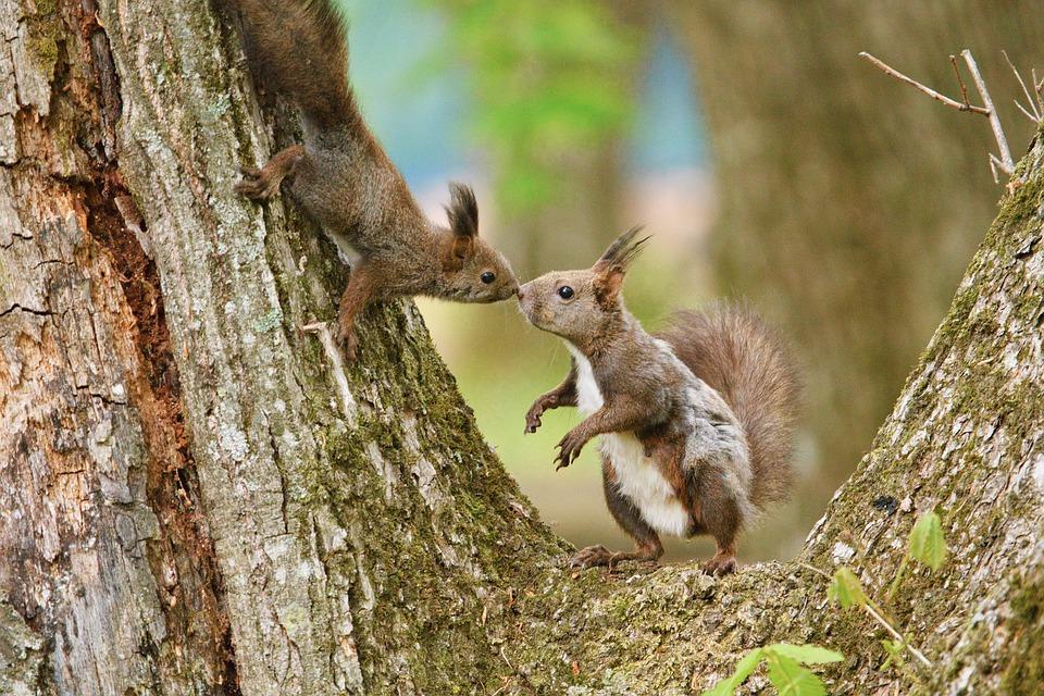 squirrel-5281783_960_720.jpg