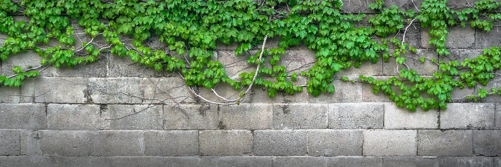ivy-1350177__340.jpg