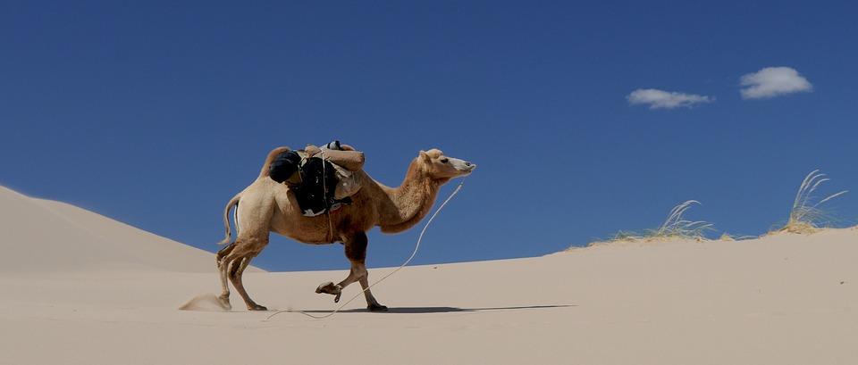 camel-692648_960_720.jpg