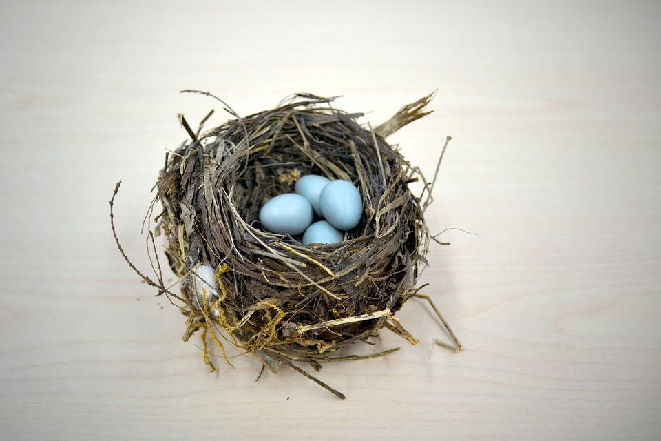 nest-1179492_960_720.jpg